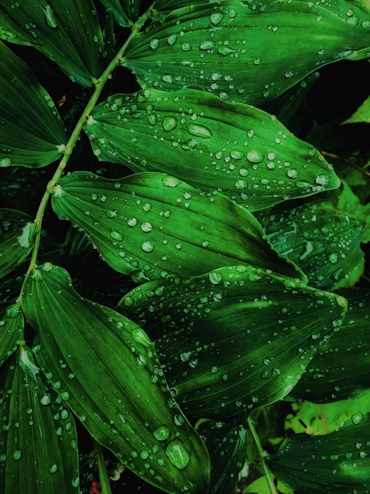 close-up-photo-of-water-drops-on-leaves-2473990