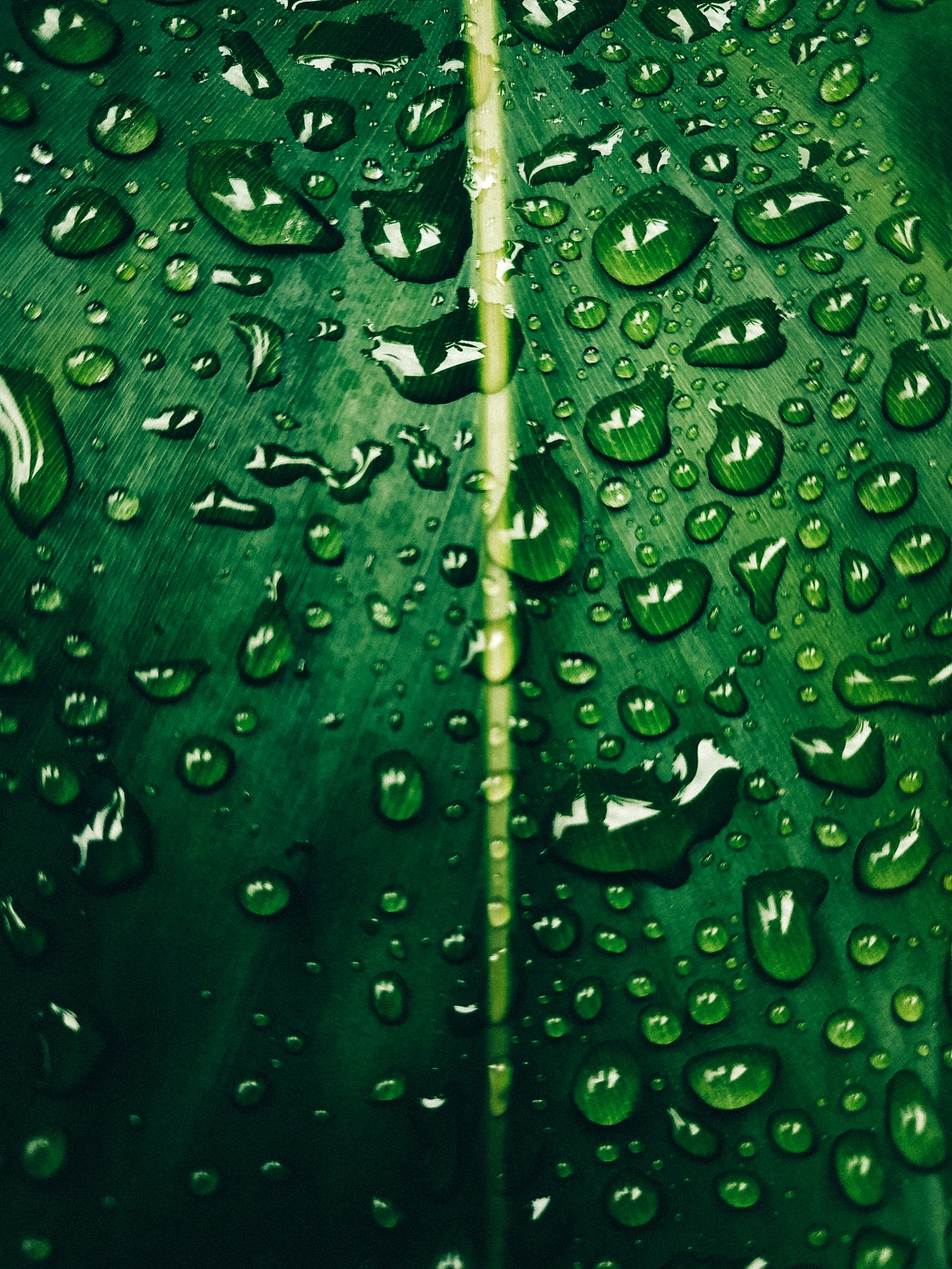 macro-photo-of-water-droplets-on-leaf-3213037
